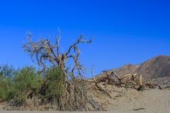 Επίπεδοι αμμόλοφοι άμμου Mesquite, κοντά στην κοιλάδα NP θανάτου φρεατίων Stovepipe στοκ φωτογραφία με δικαίωμα ελεύθερης χρήσης