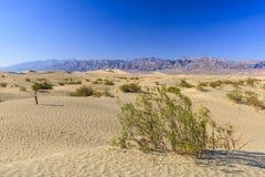 Επίπεδοι αμμόλοφοι άμμου Mesquite, κοντά στην κοιλάδα NP θανάτου φρεατίων Stovepipe στοκ φωτογραφίες