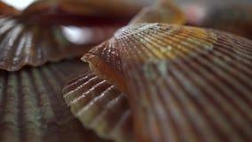 Επίπεδος μακρο παν πυροβολισμός θαλασσινών κοχυλιών φιλμ μικρού μήκους