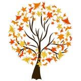 επίσης corel σύρετε το διάνυσμα απεικόνισης autumnal forest Στοκ Εικόνες
