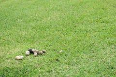 Επίστεγο σκυλιών ξηρό στον τομέα χλόης στοκ εικόνα με δικαίωμα ελεύθερης χρήσης