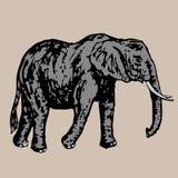 Επίτευξη περισσότερης νέας πλευράς ελεφάντων Στοκ Φωτογραφία