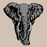 Επίτευξη περισσότερου νέου ελέφαντα fac Στοκ Εικόνες