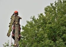 Επίτευξη του τοπ, επαγγελματικού lumberjacker στην εργασία Στοκ Φωτογραφίες