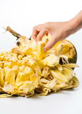 Επίτευξη χεριών jackfruit που απομονώνεται στο άσπρο υπόβαθρο Στοκ φωτογραφία με δικαίωμα ελεύθερης χρήσης