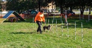 Επίδειξη ευκινησίας σκυλιών Στοκ φωτογραφία με δικαίωμα ελεύθερης χρήσης
