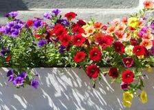 Επίδειξη θερινών λουλουδιών Στοκ φωτογραφία με δικαίωμα ελεύθερης χρήσης