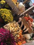 Επίδειξη πτώσης στην υπαίθρια αγορά Στοκ εικόνα με δικαίωμα ελεύθερης χρήσης