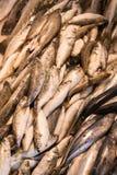 Επίδειξη των πιασμένων ψαριών Στοκ Φωτογραφία