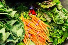 Επίδειξη των φρέσκων λαχανικών - καρότα, μαρούλι, πράσινα Στοκ Εικόνα
