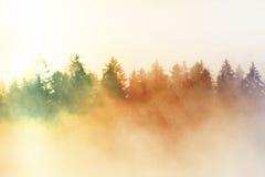 Επίδραση ταινιών Ρόδινη χαραυγή στο λοφώδες landcape Misty πρωί φθινοπώρου όμορφοι λόφοι Αιχμές των δέντρων Στοκ εικόνα με δικαίωμα ελεύθερης χρήσης