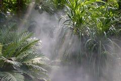 Επίδραση Tyndall του τροπικού δάσους Στοκ Φωτογραφία