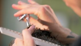 Επαγγελματικός διαστισμένος κουρέας που δίνει ένα νέο κούρεμα στον πελάτη του σε ένα barbershop απόθεμα βίντεο