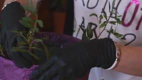 Επαγγελματική έναρξη ανθοκόμων που κάνει την ανθοδέσμη ρόδινου Peonies κλείστε επάνω φιλμ μικρού μήκους
