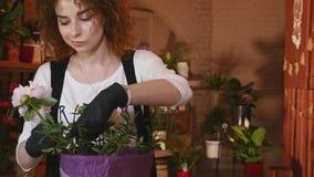 Επαγγελματική έναρξη ανθοκόμων που κάνει την ανθοδέσμη ρόδινου Peonies φιλμ μικρού μήκους