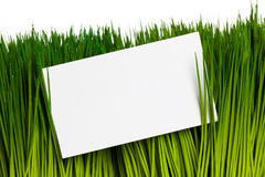 Επαγγελματική κάρτα και πράσινη χλόη Στοκ Εικόνα