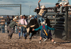 Επαγγελματική οδήγηση του Bull ροντέο Στοκ Εικόνες