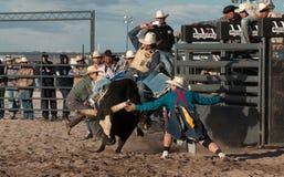 Επαγγελματική οδήγηση του Bull ροντέο Στοκ εικόνα με δικαίωμα ελεύθερης χρήσης