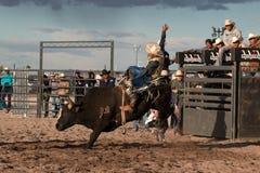 Επαγγελματική οδήγηση του Bull ροντέο Στοκ εικόνες με δικαίωμα ελεύθερης χρήσης