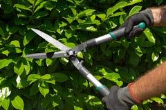 Επαγγελματική περικοπή κηπουρών ένας φράκτης Στοκ εικόνα με δικαίωμα ελεύθερης χρήσης