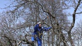 Επαγγελματικοί κλάδοι δέντρων μηλιάς κηπουρών τακτοποιώντας με τους κουρευτές ζώων πέρα από το μπλε ουρανό απόθεμα βίντεο
