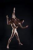 Επαγγελματικοί νέοι gymnasts που χορεύουν στο στούντιο Στοκ Εικόνα