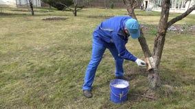 Επαγγελματικός κηπουρός που ασπρίζει τον κορμό δέντρων μηλιάς φρούτων με την κιμωλία απόθεμα βίντεο
