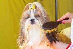 Επαγγελματικός κύριος σκυλιών κουρέματος Στοκ εικόνες με δικαίωμα ελεύθερης χρήσης