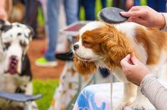 Επαγγελματικός κύριος σκυλιών κουρέματος Στοκ φωτογραφίες με δικαίωμα ελεύθερης χρήσης