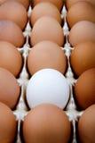 επαναστάτης αυγών Στοκ εικόνα με δικαίωμα ελεύθερης χρήσης