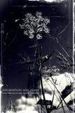 Επανασύνδεση με τη φύση Στοκ Εικόνες
