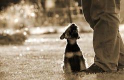Επανδρώνει το σκυλί κουταβιών αγάπης καλύτερων φίλων στα πόδια ιδιοκτητών Στοκ Εικόνες