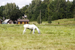 Επαρχία Στοκ φωτογραφία με δικαίωμα ελεύθερης χρήσης