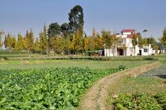 επαρχία sichuan αγροτικού pengzhou τη&sigmaf Στοκ Εικόνες