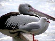 επενδυμένοι με φτερά φίλοι Στοκ Εικόνα