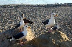 Επενδυμένοι με φτερά φίλοι Quintet Στοκ Φωτογραφία