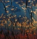 επενδυμένο με φτερά ηλιο& Στοκ Φωτογραφίες