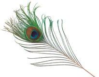 επενδύστε με φτερά peacock Στοκ Φωτογραφίες