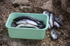 επεξεργασία ψαριών Στοκ φωτογραφίες με δικαίωμα ελεύθερης χρήσης