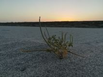 επεξεργασμένο καλυμμένο σκηνή ηλιοβασίλεμα έκθεσης hdr πολύ στοκ φωτογραφίες