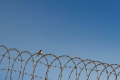 Επιβλαβής ή χρήσιμος; Κάνετε την καλύτερη χρήση από το περιβάλλον σας Β Στοκ φωτογραφία με δικαίωμα ελεύθερης χρήσης