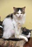 Επιβλαβής, δυστυχισμένη γάτα Στοκ φωτογραφία με δικαίωμα ελεύθερης χρήσης