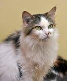Επιβλαβής, δυστυχισμένη γάτα Στοκ εικόνα με δικαίωμα ελεύθερης χρήσης