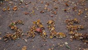 Επιγραφή πώλησης φθινοπώρου φιαγμένη από χρυσά πεσμένα φύλλα από το δέντρο φιλμ μικρού μήκους
