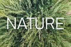 """Επιγραφή """"φύση """"στο υπόβαθρο πράσινων εγκαταστάσεων διαβίωσης διανυσματική απεικόνιση"""