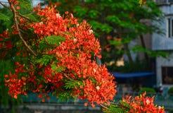 Επιδεικτικά λουλούδια που ανθίζουν στο δέντρο στοκ εικόνες με δικαίωμα ελεύθερης χρήσης