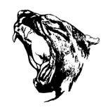 Επιθετικός πάνθηρας (κεφάλι μιας άγριας γάτας) Στοκ φωτογραφίες με δικαίωμα ελεύθερης χρήσης