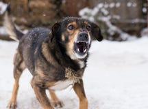 Επιθετικό, σκυλί στοκ φωτογραφία