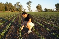 επιθεωρώντας φυτό στοκ φωτογραφία