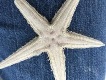 επιθυμία αστεριών Στοκ Εικόνα